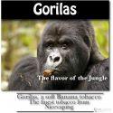 Gorilas Tobacco Premium