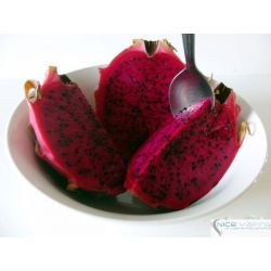 Dragon Fruit Premium